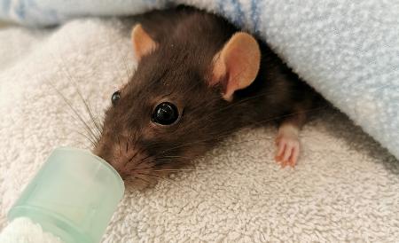 Small furry animal care