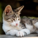 3 important summer disease checks for cats in Prestatyn