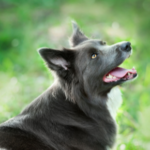 Richard talks Lyme disease, kennel cough and other summer dog diseases