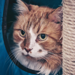 How to find the right cat sitter in Prestatyn
