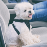 Sara's 10 steps to treating car sickness in dogs