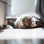 AllPets Vets gets honest about cats