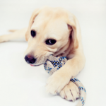 Richard Ryvar answers your questions on your puppy's chewing phase