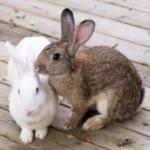 Louise advises if rabbits, guinea pigs & hamsters need companions